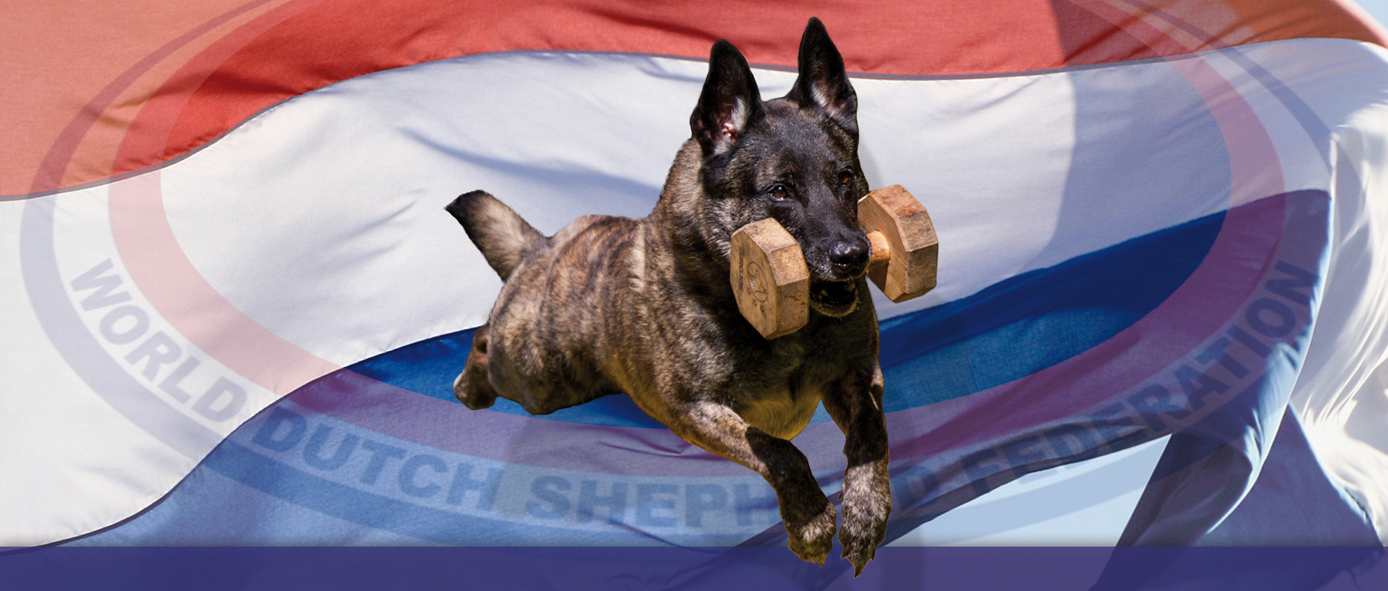 vlag helder met hond