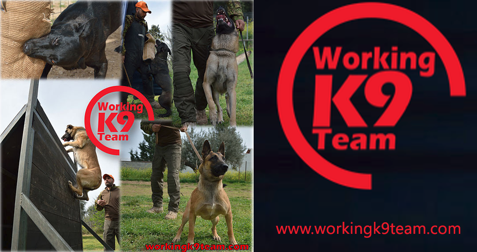 working team K9 sponsor
