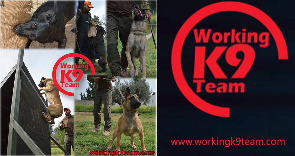 working team K9 sponsor